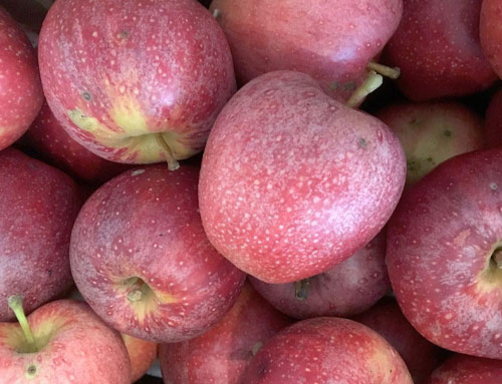 Oyler's Organic Farms & Market