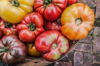 Heirloom Tomatoe Salsa