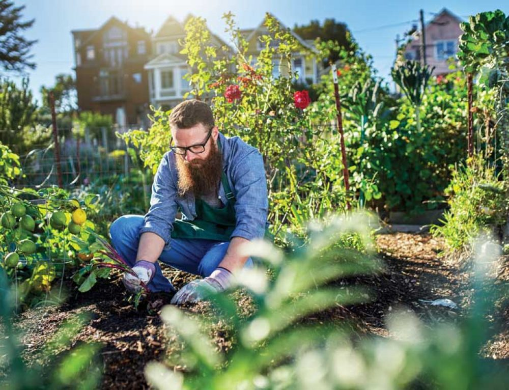 Pittsburgh Growers Co-op initiative helps urban farmers thrive.