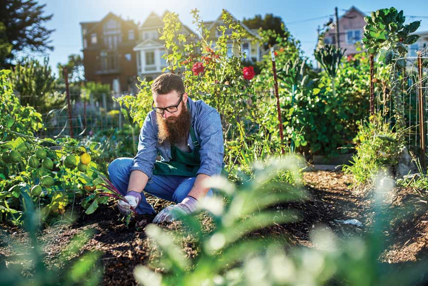 Pittsburgh Growers Co-op initiative helps urban farmers thrive.
