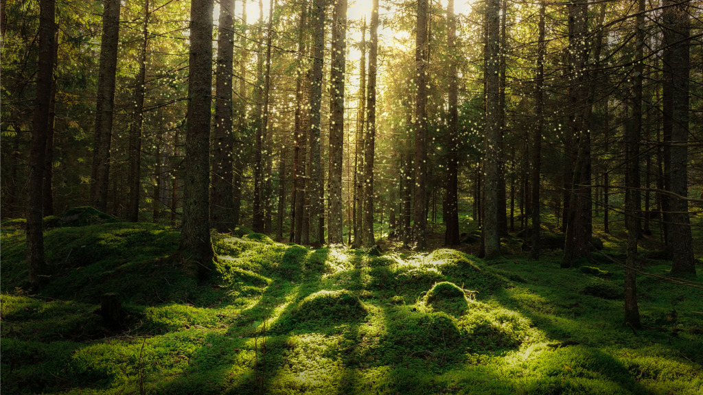dense forest with light coming through tall trees